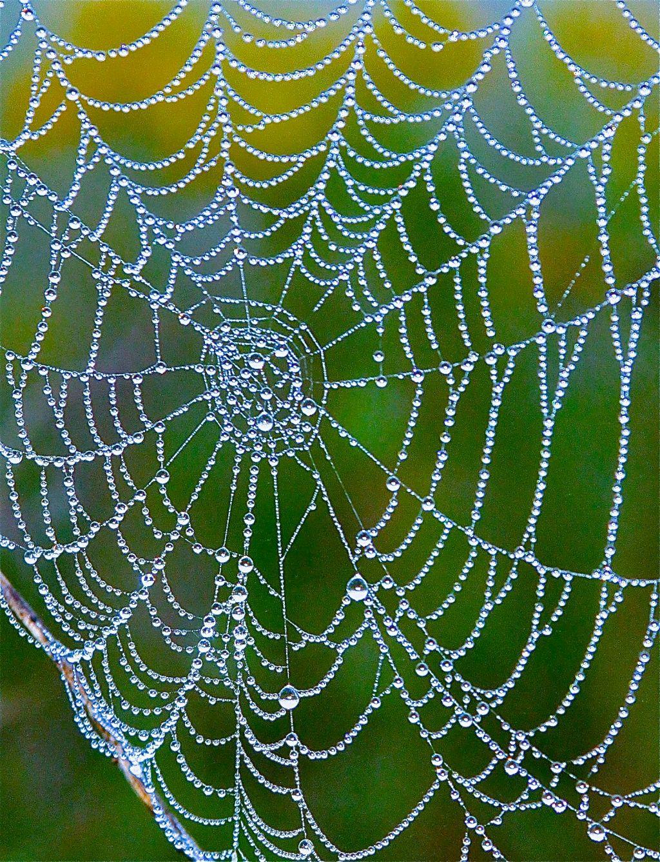 SCENIC-DEW ON SPIDERWEB