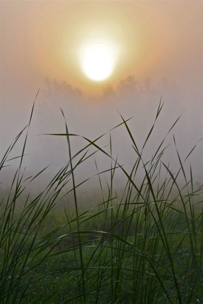SCENIC-SUNRISE-FOG AND GRASS