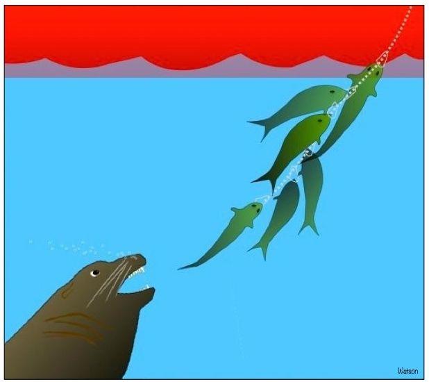 ILLUST-SEA LION AND FISH STRINGER