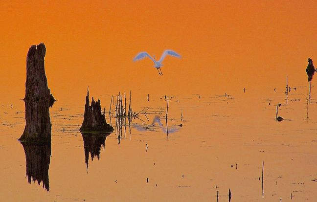 ART-EGRET SUNSET TAKEOFF-16