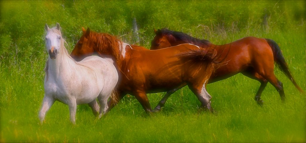 ART-FA-HORSES IN FIELD