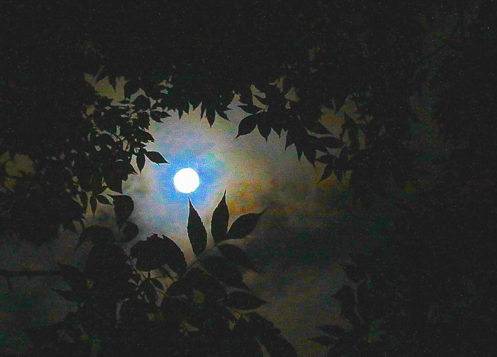 ART-MOON THROUGH LEAVES-15