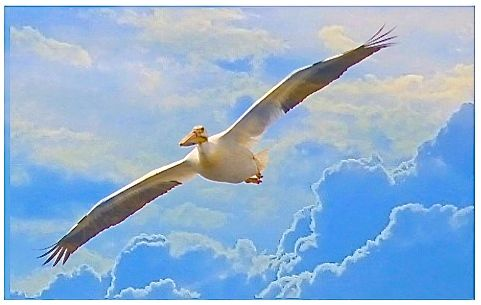 ART-PELICAN AGAINST CLOUDS