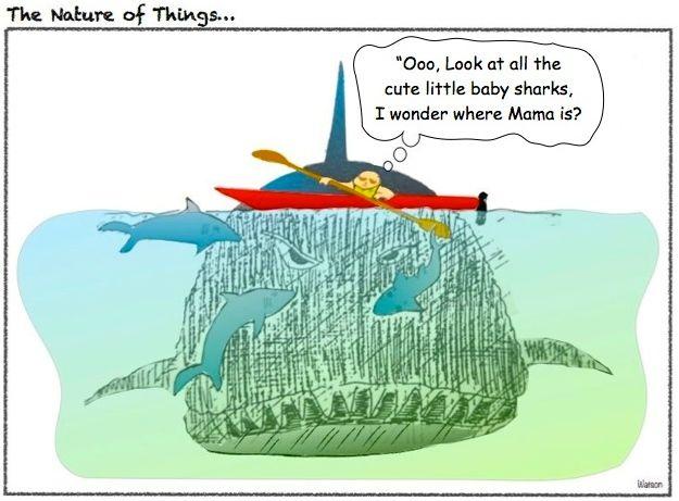 CARTOON-BABY SHARKS AND KAYAKER