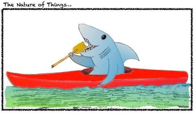 CARTOON - SHARK IN KAYAK